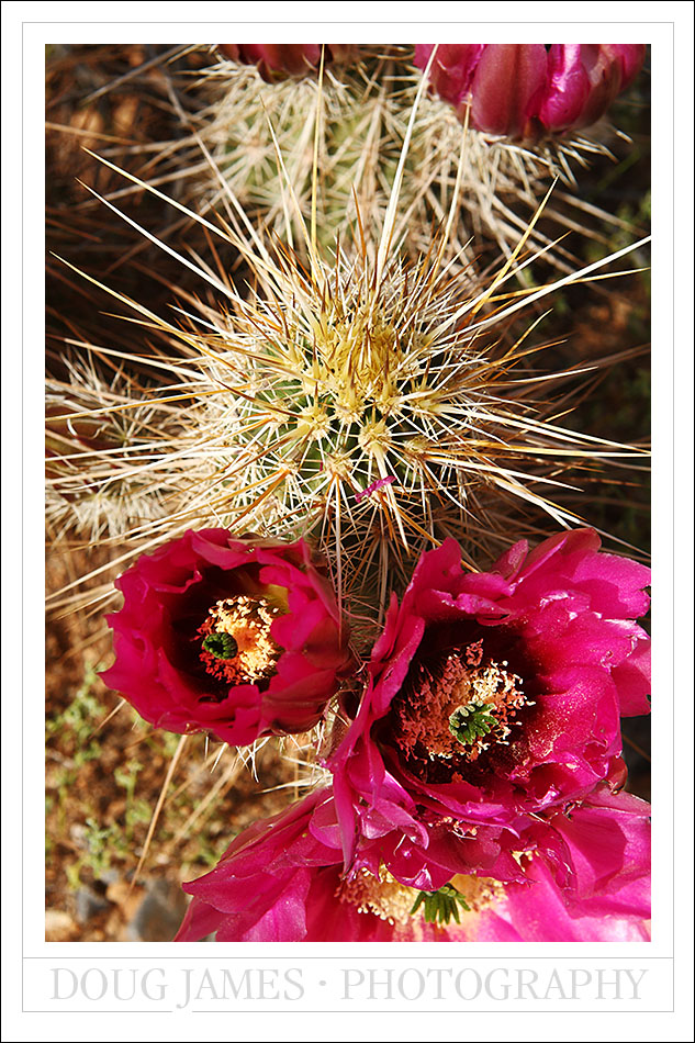 Springtime and wildflowers in the desert southwest